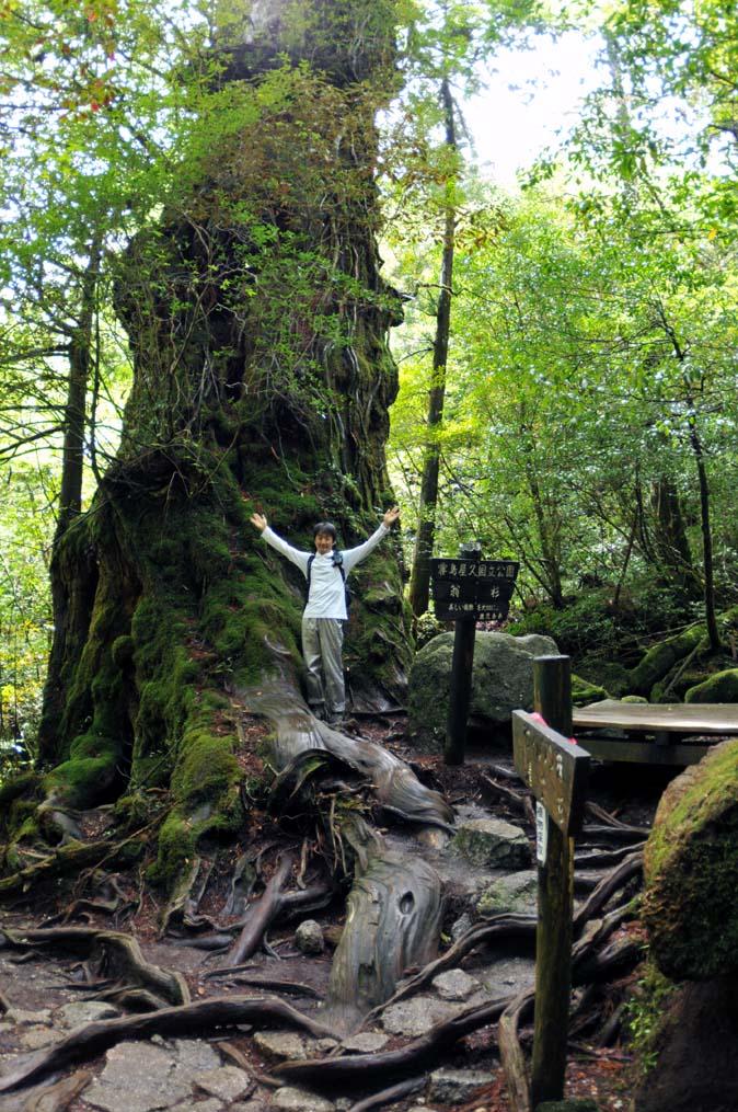 DSC_5643 の翁杉の大きさ0.jpg