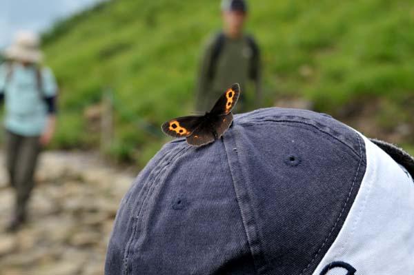 DSC_6188 八方池の蝶々.jpg